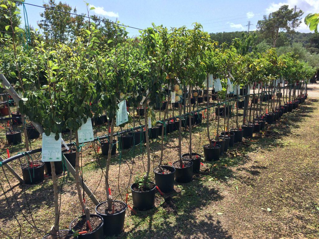 Les arbres fruitiers viveros de cardedeu for Viveros barcelona