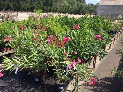 Vivers-de-Cardedeu – Planta Arbustiva- copia