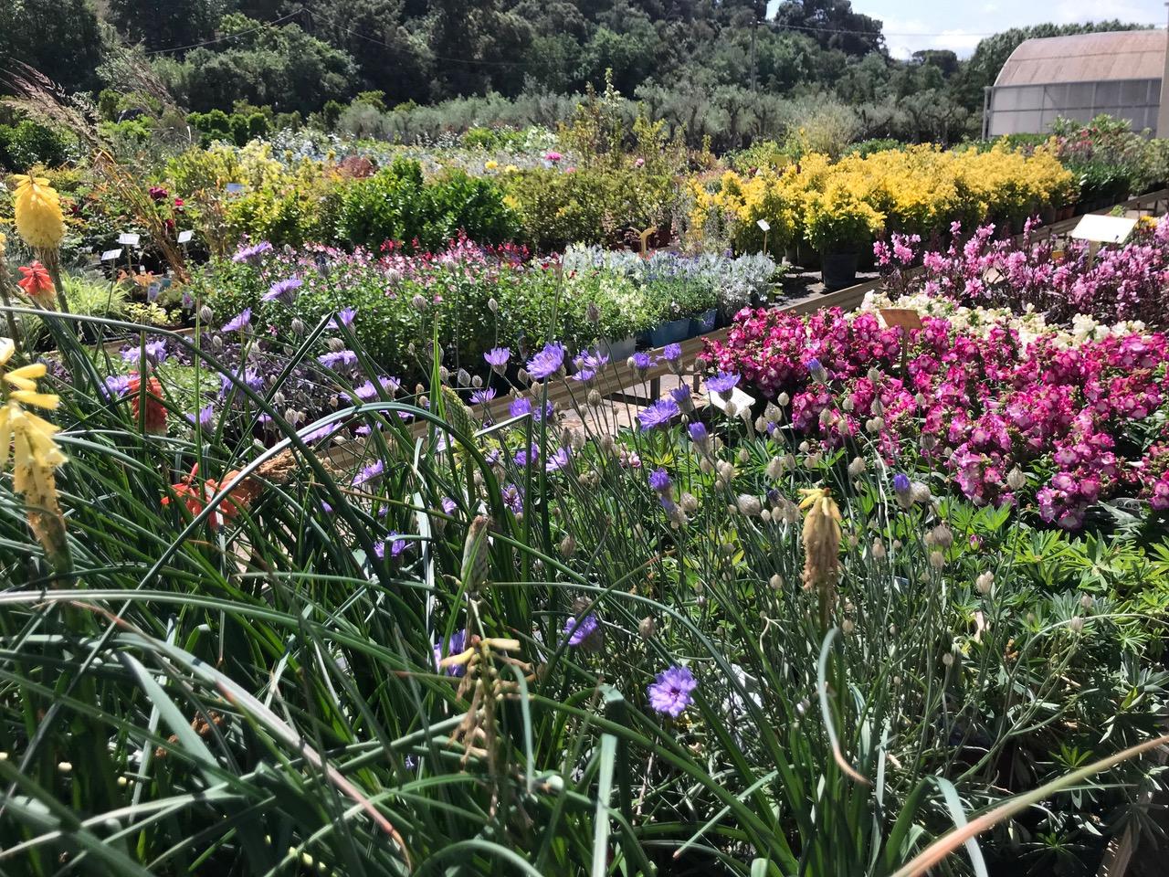 Garden – Vivers de Cardedeu